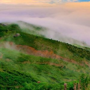 تور جنگل الیمستان و جنگلنوردی در این مکان زیبا